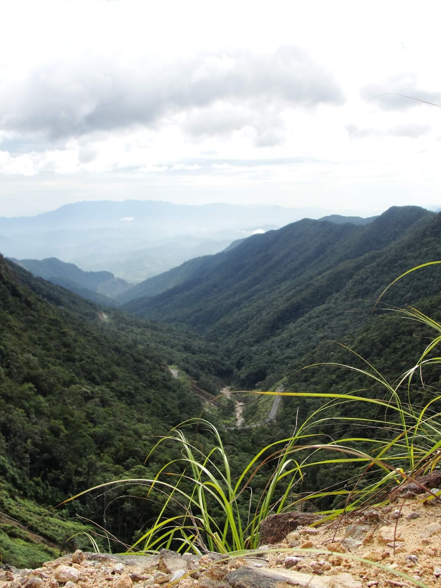 фото вьетнам дорога в далат фото стройна